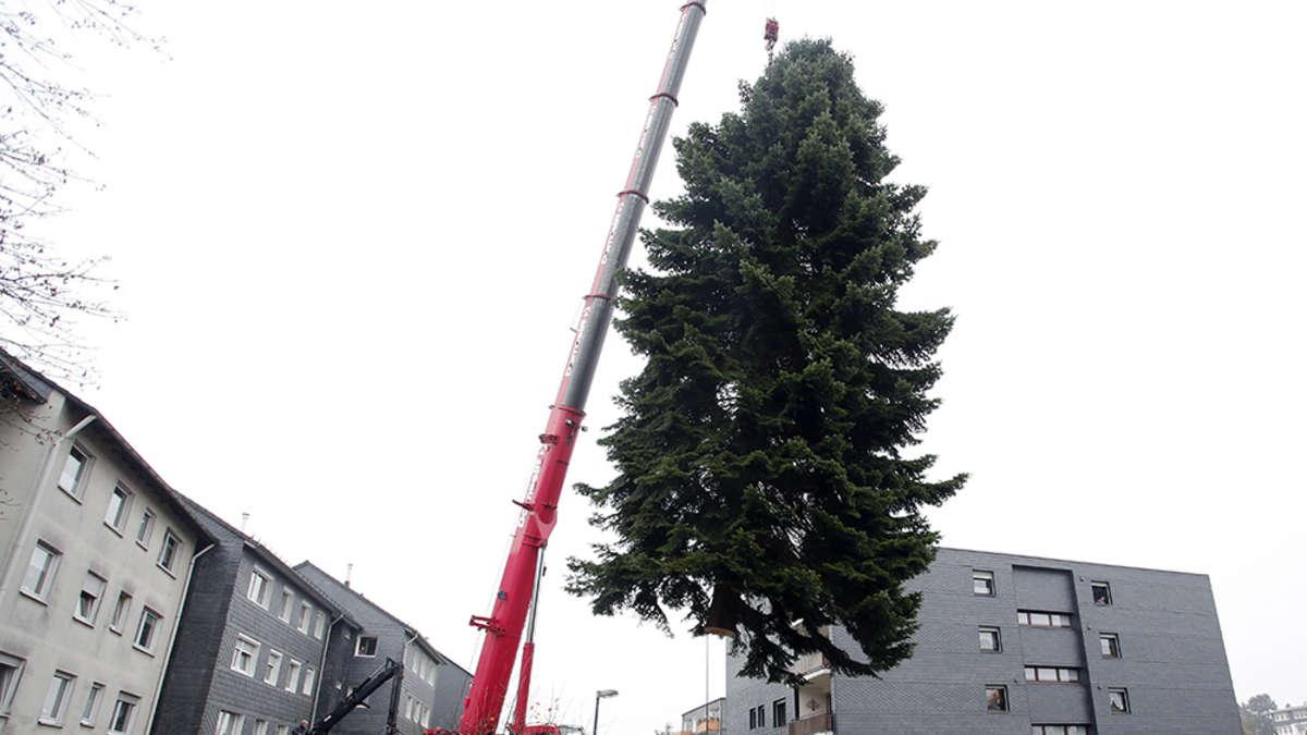 rader tanne wird weihnachtsbaum in berlin radevormwald. Black Bedroom Furniture Sets. Home Design Ideas